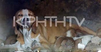 Απίστευτη κτηνωδία: Έκλεισαν κουτάβια μέσα σε φούρνο και έβαλαν φωτιά