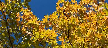 Φθινοπωρινός ο καιρός σήμερα