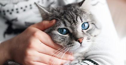 4 Οκτωβρίου 2018: Τώρα όλοι γιορτάζουν την Παγκόσμια Ημέρα των Ζώων στα PET CITY