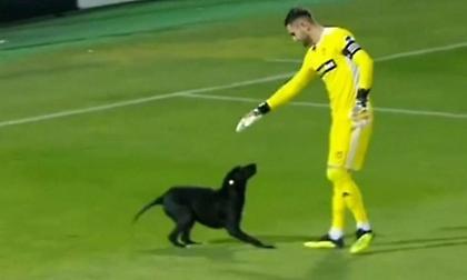 Σκύλος διακόπτει αγώνα για να κάνει παιχνίδια με τον τερματοφύλακα! (video)