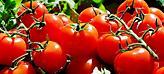Δέσμευσαν πάνω από 4 τόνους ντομάτες και κολοκύθια στον Πειραιά