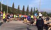 Μαραθώνιος 2018: Τσοπάνης και πρόβατα τρέχουν μαζί με τους αθλητές (vid)
