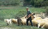 Βοσκός πυροβόλησε ιερόδουλη γιατί διαφώνησαν στην τιμή