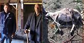 Πρωτοφανές: Ελάφια επιτέθηκαν και σκότωσαν πρόβατα στη Λήμνο (video)