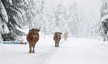 Συνεχίζεται η χιονόπτωση στη Δυτική Θεσσαλία: Με αλυσίδες στα Τρίκαλα