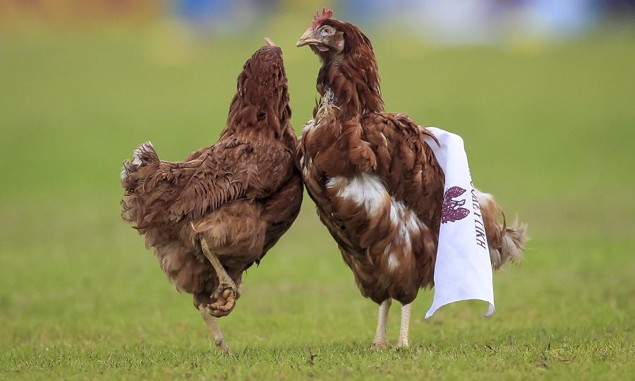 Υποδέχτηκαν με… κότες την Προοδευτική οι οπαδοί του Ιωνικού (pics)