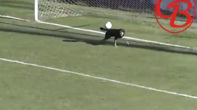 Σκύλος απέκρουσε σίγουρο γκολ στην Αργεντινή! (video)