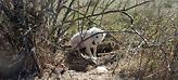 Λέσβος: 1.600 ευρώ πρόστιμο για «βαρελόσκυλο» στην Αχλαδερή (pics)