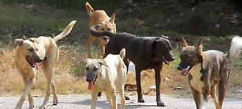 Κοζάνη: Βγήκε βόλτα και του επιτέθηκαν… 20 αδέσποτα σκυλιά