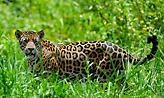 Αττικό Ζωολογικό Πάρκο: Χαμός στα social media για τους ιαγουάρους