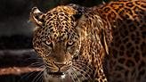 Ιδιοκτήτης Αττικού Ζωολογικού Πάρκου: Τραγική αλλά σωστή απόφαση να θανατωθούν τα τζάγκουαρ