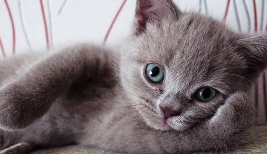 Δες τι μπορείς να πάθεις αν έχεις γάτα στο σπίτι – Ποια εξέταση πρέπει να της κάνεις