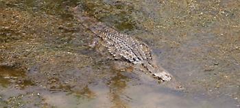 Εκανε το σπίτι του στη Ρόδο ζωολογικό κήπο: Είχε 400 παπαγάλους, 12 φίδια, 5 κροκόδειλους