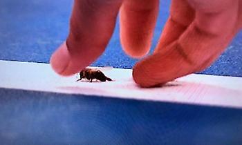 «Έσωσε» μέλισσα ο Ναδάλ (pics)