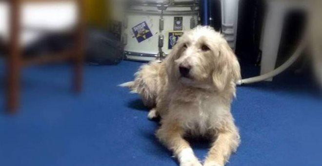 Σκότωσαν με φόλα τη μασκότ των φίλων του Αστέρα Τρίπολης και άλλα 10 σκυλιά