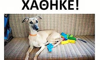 Οικογένεια τουριστών που πρέπει να φύγει έχασε το σκυλί της στην Πάτρα - Βοηθήστε να βρεθεί η Δάφνη