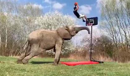 Ο πιο... μπασκετικός ελέφαντας (video)