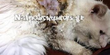 Ναύπακτος: Εριξε οξύ σε γάτα -Δικογραφία σε βάρος του ασυνείδητου