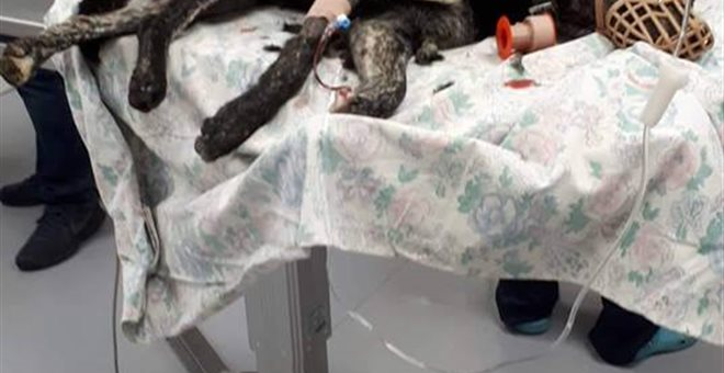 Κτηνωδία στην Κρήτη: Άγνωστος πυροβόλησε σκυλί και το άφησε να αιμορραγεί