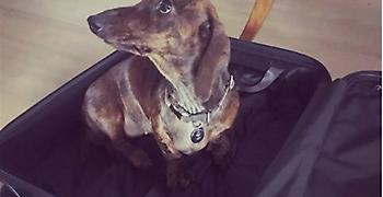Ο σκύλος του Κυριάκου Μητσοτάκη συστήνεται στο instagram μέσα σε βαλίτσα