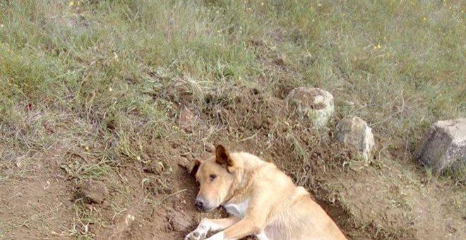 Κτηνωδία: Άγνωστοι έθαψαν σκύλο ζωντανό στην Παλλήνη