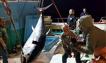 Νάξος: Δεν πίστευαν στα μάτια τους – Ψάρεψαν τόνο 288 κιλών (pics)