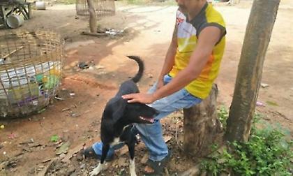 Σκύλος σώζει νεογέννητο μωρό -Το είχε θάψει ζωντανό η ανήλικη μητέρα του