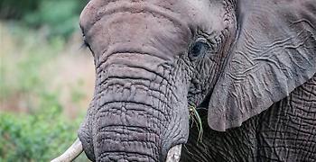 Άρση στην απαγόρευση του κυνηγιού ελεφάντων στην Μποτσουάνα (video)