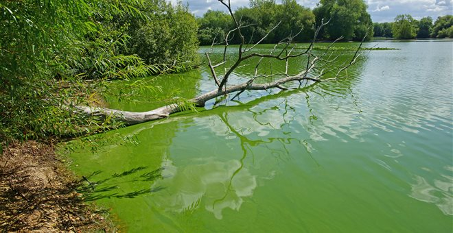«Πήχτρα» στα αντιβιοτικά πολλά ποτάμια στη Γη