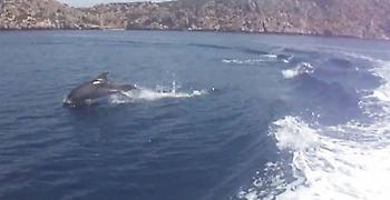 Μοναδικά πλάνα με δελφίνια στην Κορινθία (video)