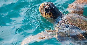 Η ΕΕ προστατεύει τις θαλάσσιες χελώνες και τα θαλάσσια οικοσυστήματά μας