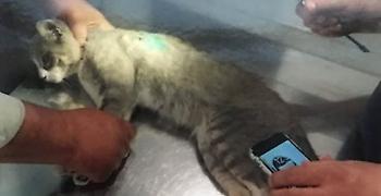 Λαμία: Ποινή φυλάκισης 16 μηνών σε λυκειάρχη - Πυροβόλησε και σκότωσε γάτα