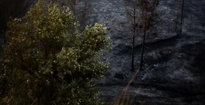 Ποιο είναι το δάσος Στενής Natura που καίγεται - Βιβλικές καταστροφές (pic)