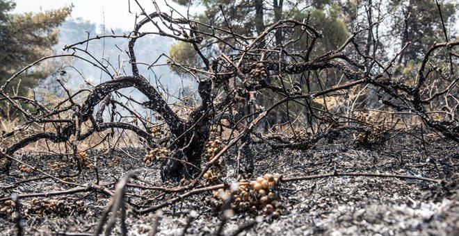 Εύβοια: Κρανίου τόπος οι περιοχές που κάηκαν- Aποκαΐδια αντί πρασίνου