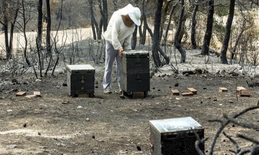 Σε ύφεση κι οριοθετημένη η φωτιά στην Εύβοια - 23.565 στρέμματα καμένης γης