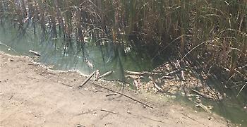 Λήψη άμεσων μέτρων για το Πάρκο Τρίτση ζητά ο Δήμος Ιλίου από τον Χατζηδάκη