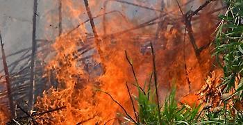 Σε εξέλιξη πυρκαγιά στη Σαμοθράκη