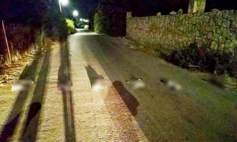 Κρήτη: Σκότωσαν γάτες και τις έστησαν στη σειρά