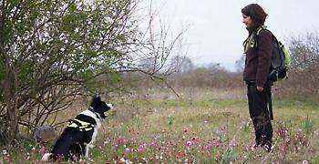Μαζικά κρούσματα φόλας στην Φλώρινα: 26 σκυλιά βρήκαν φρικτό θάνατο