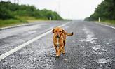 Μαζική δηλητηρίαση 26 σκύλων από φόλες στη Φλώρινα