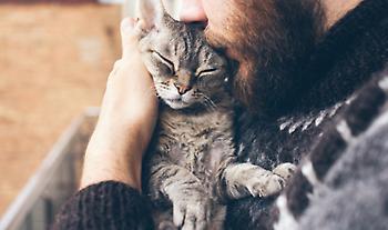 Οι γάτες δένονται συναισθηματικά με τους ανθρώπους αλλά δεν το δείχνουν πάντα