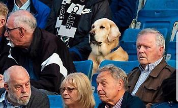 Ο σκύλος θεατής αγώνα ποδοσφαίρου που έγινε viral (pic)