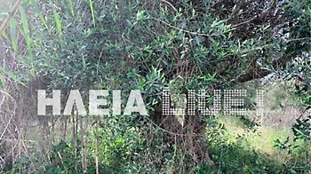 Πύργος: Άνδρας βρέθηκε νεκρός κρεμασμένος σε δέντρο