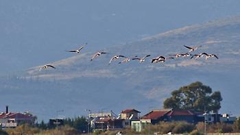 Γιατί δεν τα κατάφεραν φέτος χιλιάδες μεταναστευτικά πτηνά