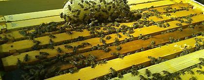 21 εκατ. ευρώ για το νέο πρόγραμμα μελισσοκομίας