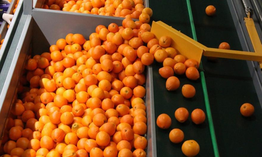 Δέσμευσαν 1,5 τόνο ακατάλληλα πορτοκάλια στου Ρέντη