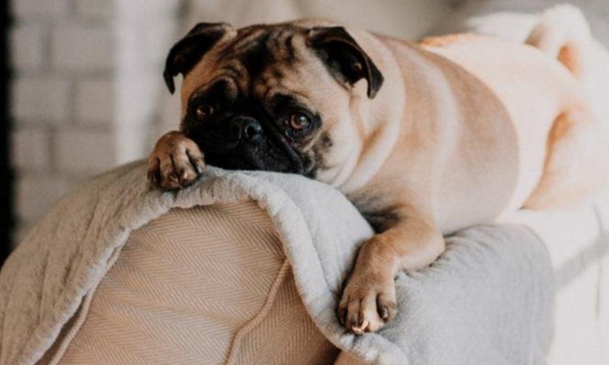 Οι 3 μεγαλύτεροι φόβοι του σκύλου σου που πρέπει οπωσδήποτε να γνωρίζεις