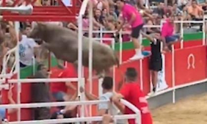 Σοκαριστική σκηνή με ταύρο να πηδάει από την αρένα στην εξέδρα
