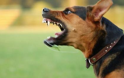 Τραγικός θάνατος για 29χρονη έγκυο από επίθεση σκύλων