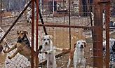 «Ιανός»: Νεκρά σκυλιά σε καταφύγια - Κραυγή απόγνωσης από φιλοζωικά σωματεία